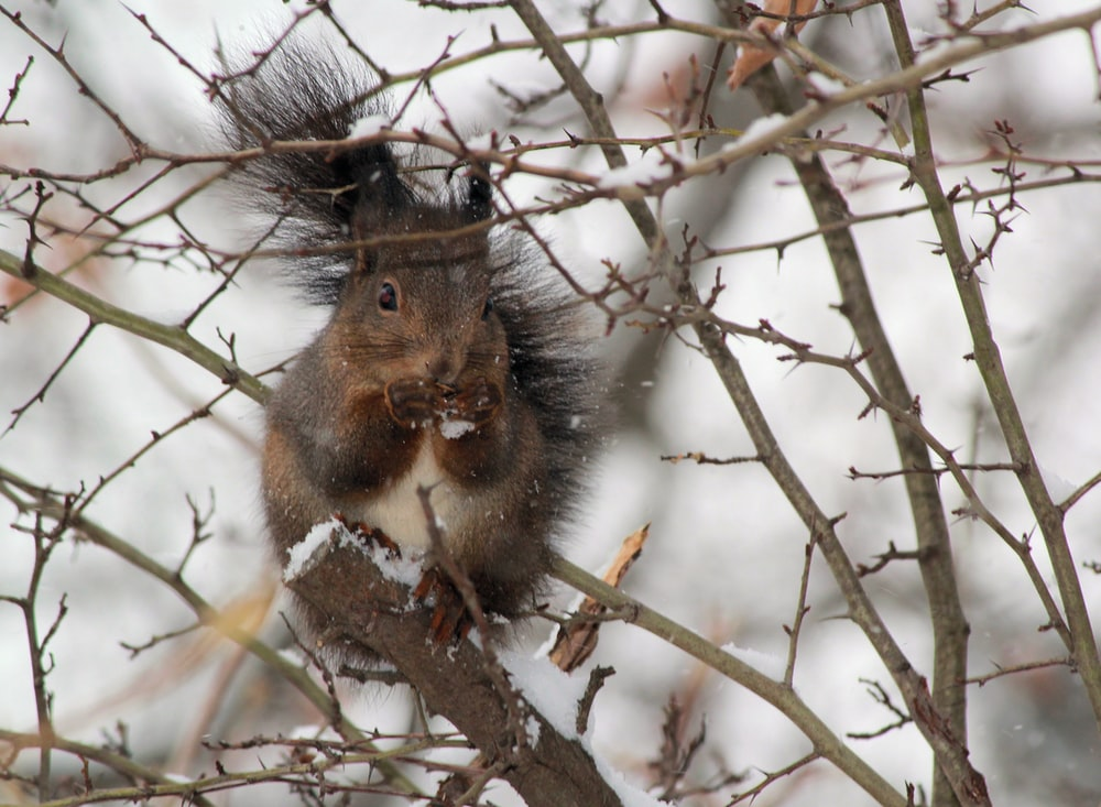 brown squirrel standing on branch