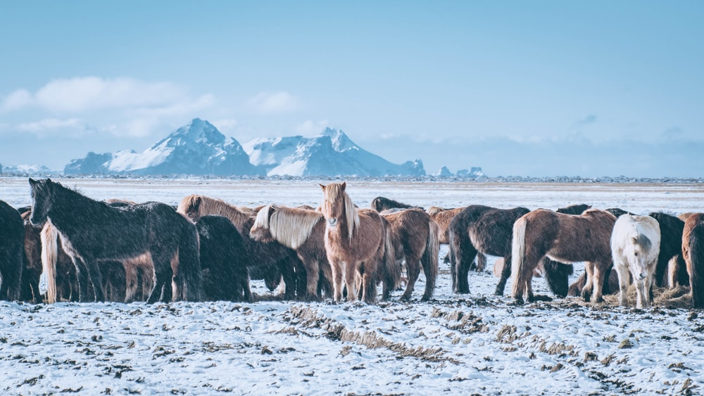 assorted-color of horses under clear blue sky