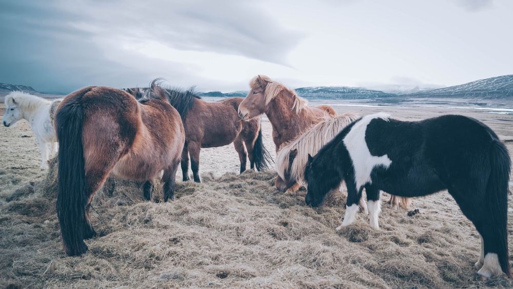 group of horses standing on sand