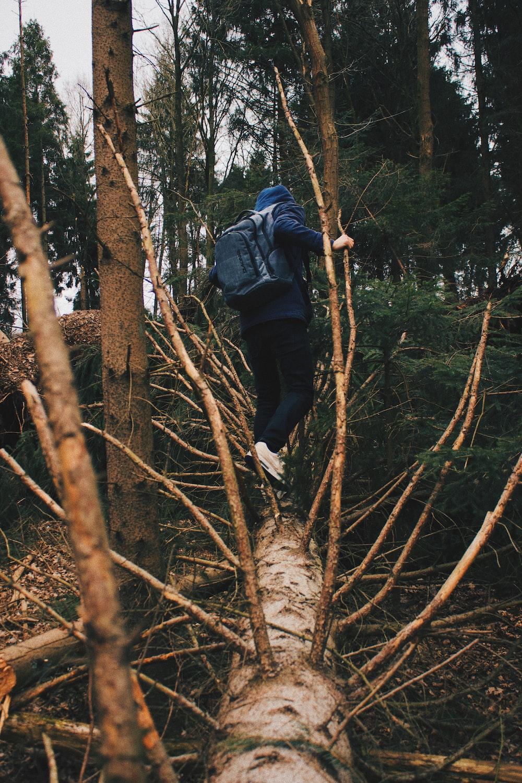 man walking on tree log during daytime