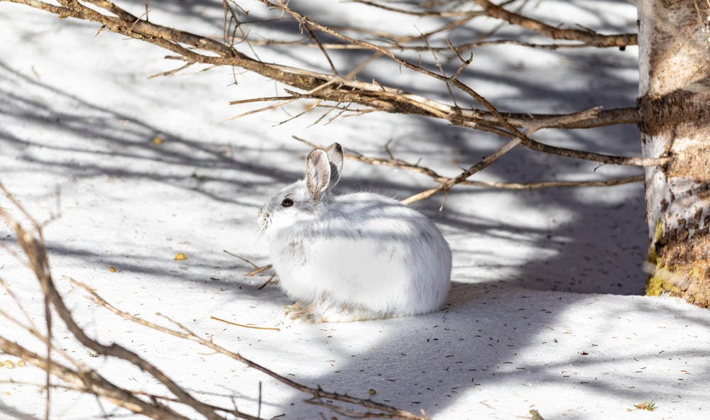 white rabbit surrounded by snow