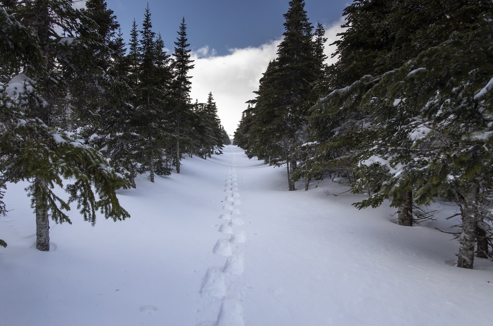 footstep on snow surrounded by snow covered trees