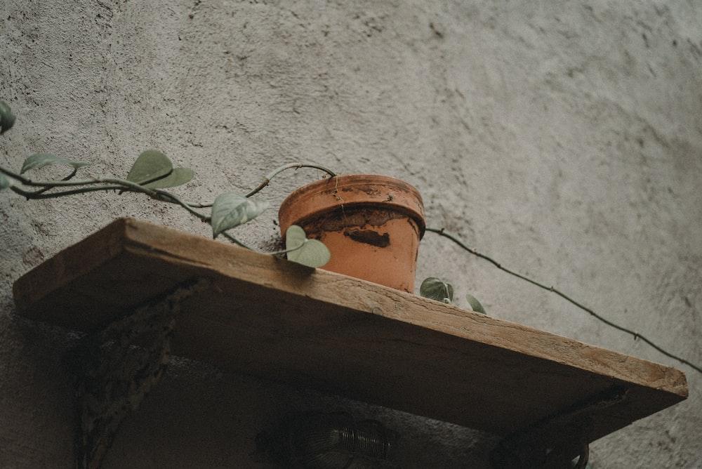 brown pot on rack