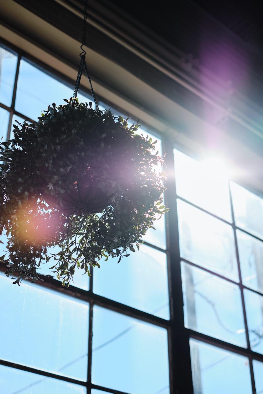 hanging indoor plant near window