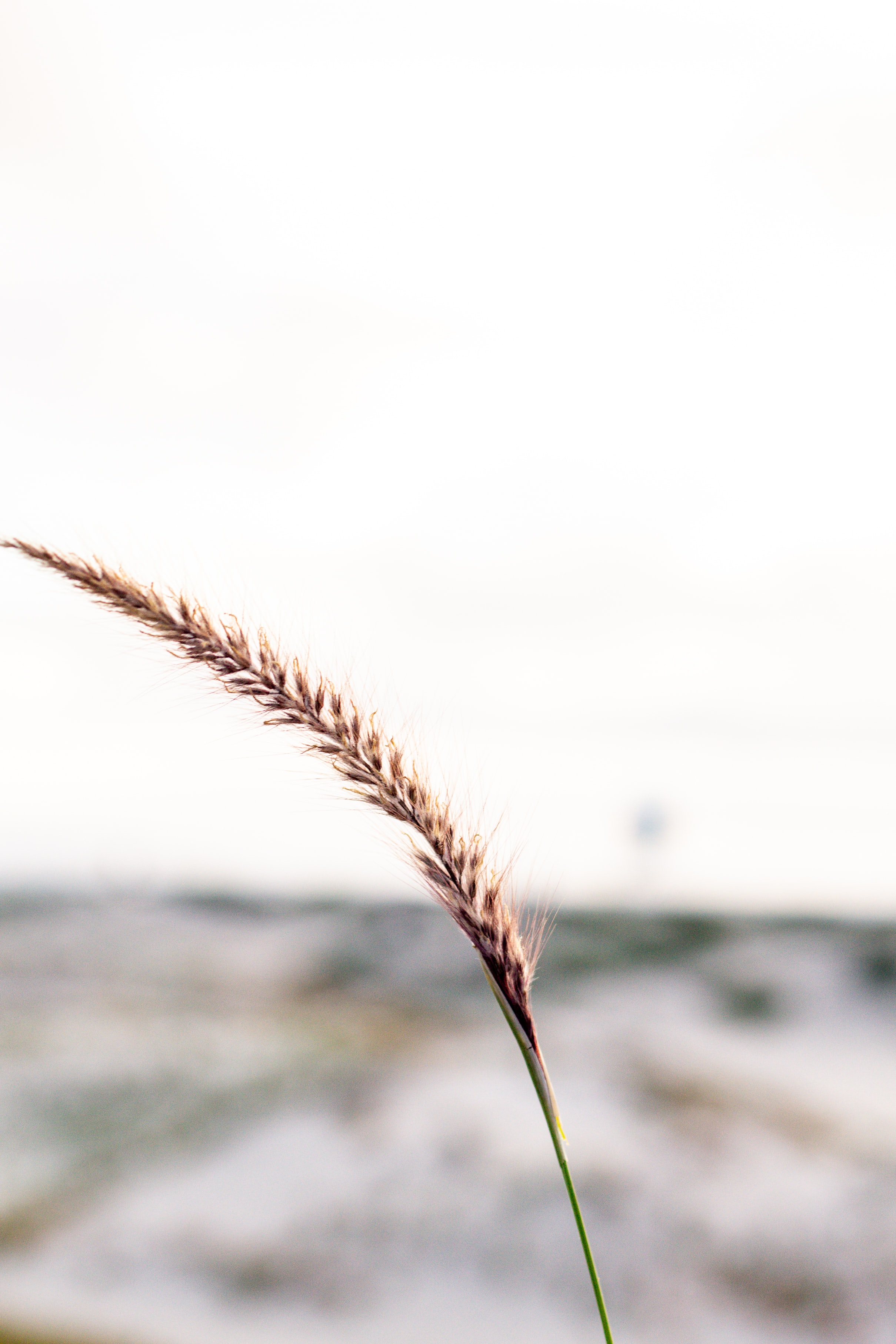 brown wheat in close-up photography during daytime