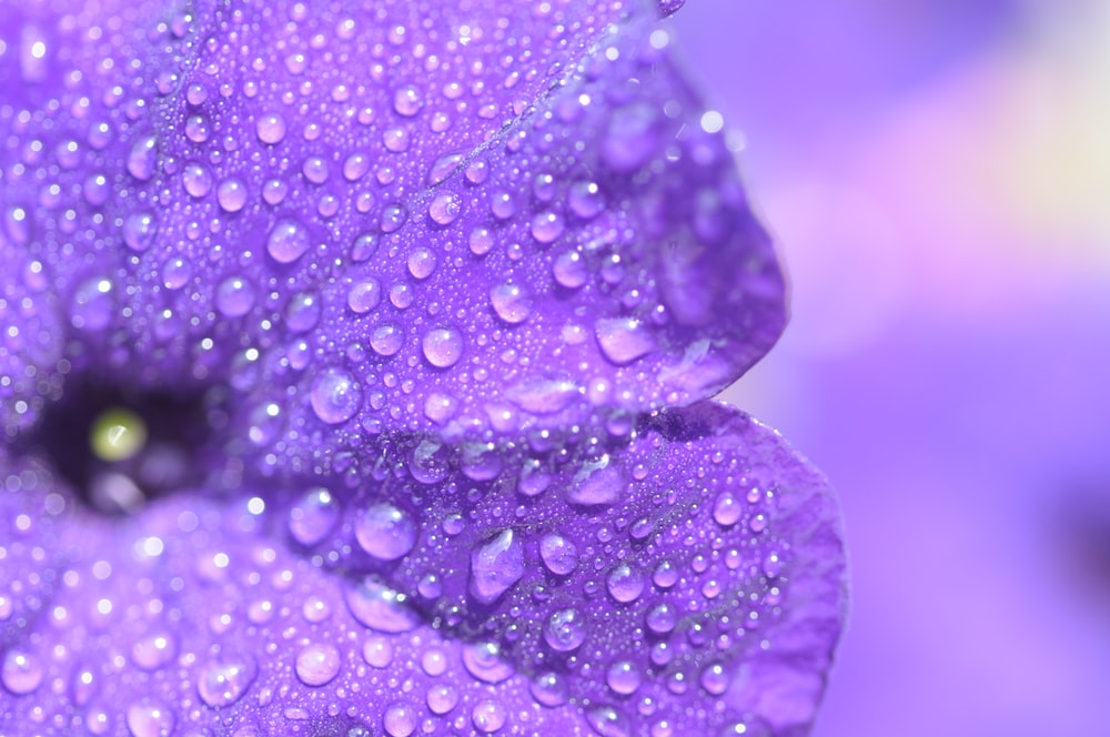 close-up photography of purple petaled flower