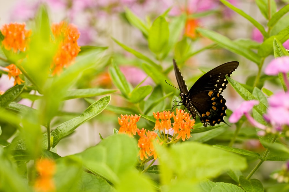 butterfly on flwoer