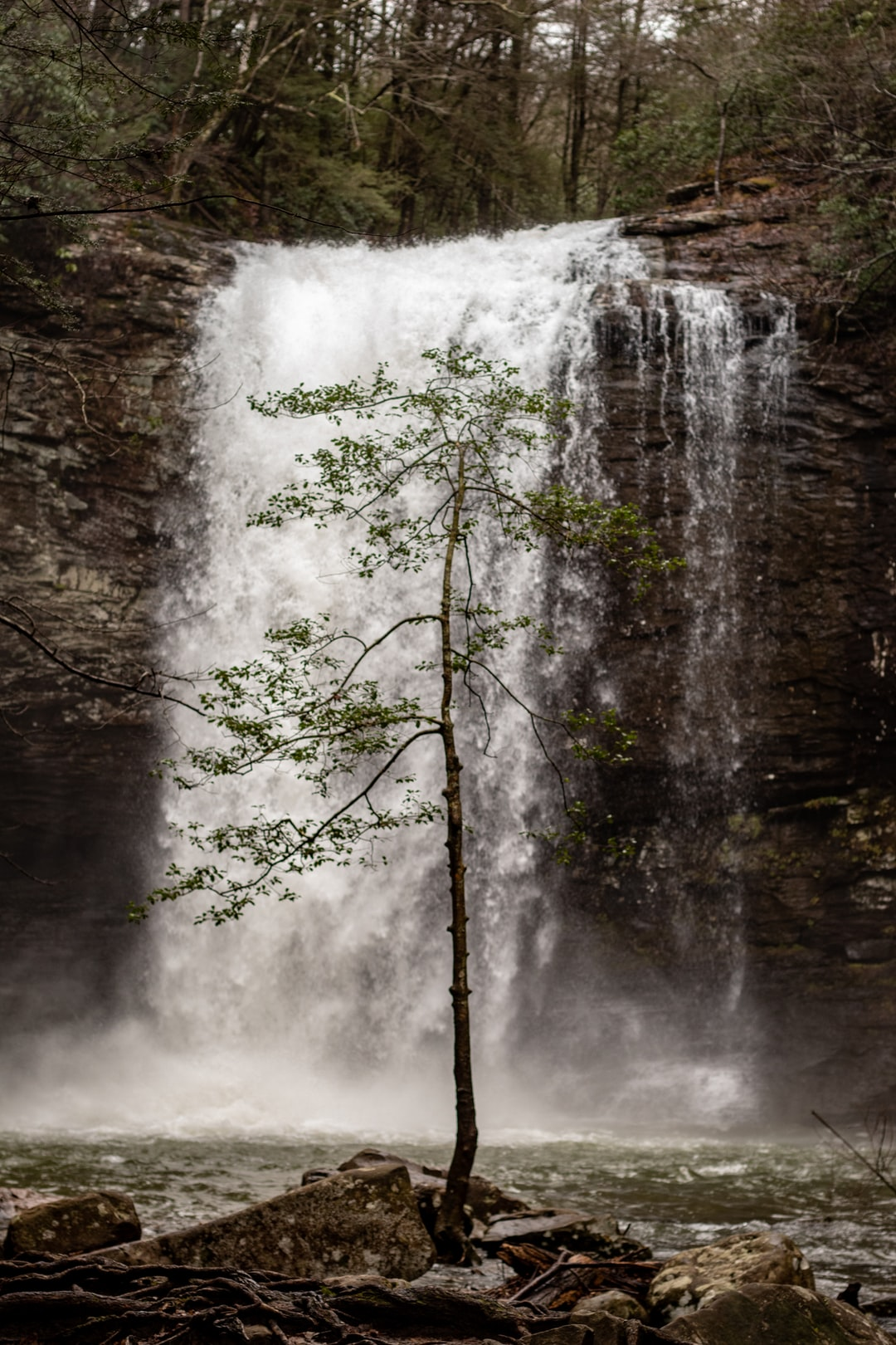 A lone tree stands before Cherokee Falls.