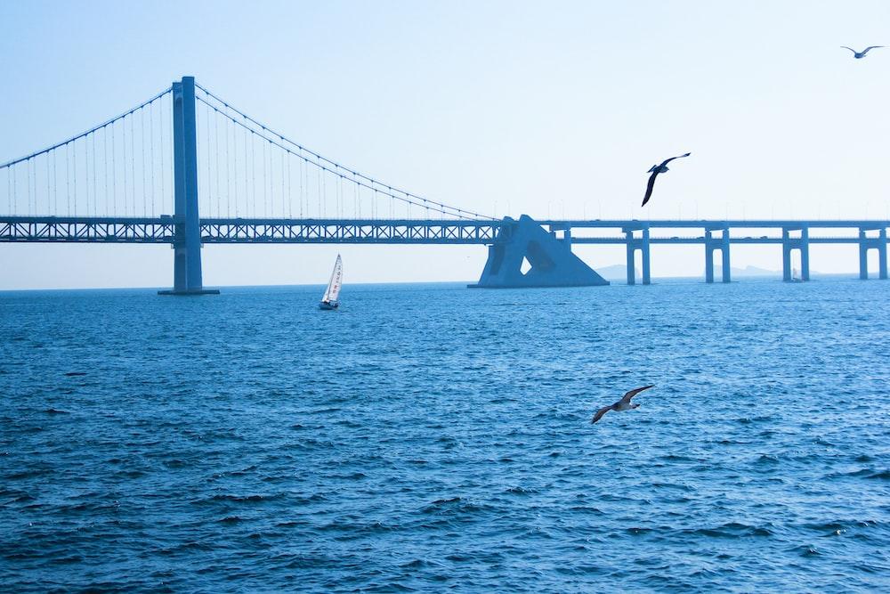 seagulls hovering over sea near bridge