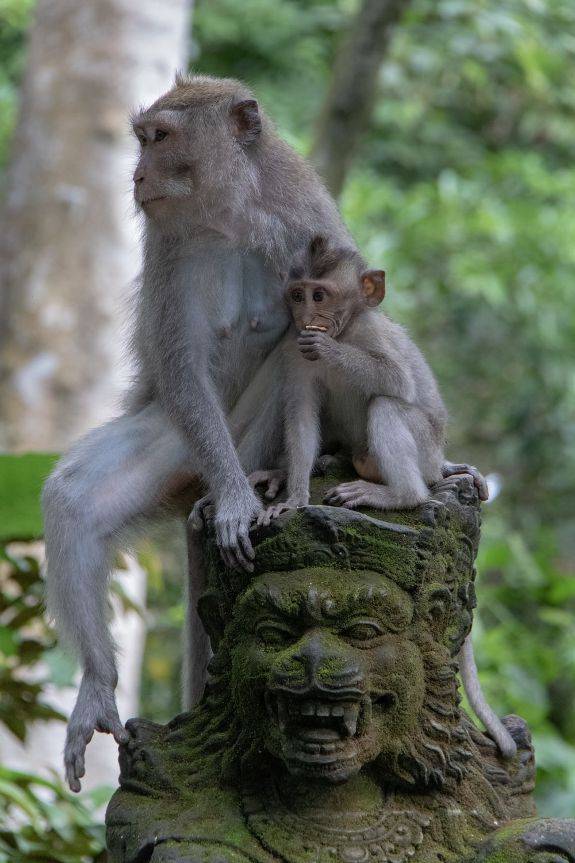 two primates