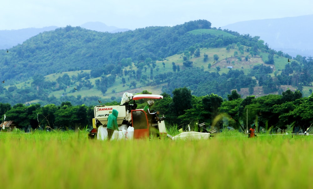 white and red harvester machine in rice fields