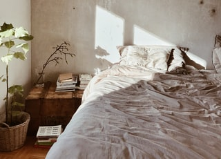 leaf plant near bed