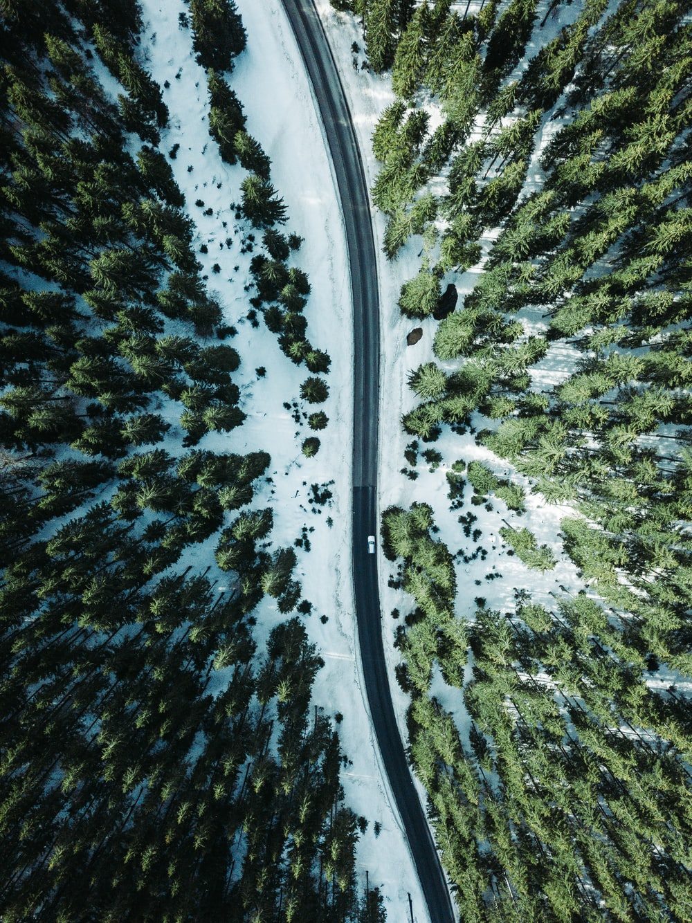 aerial photography vehicle on road surrounded by trees