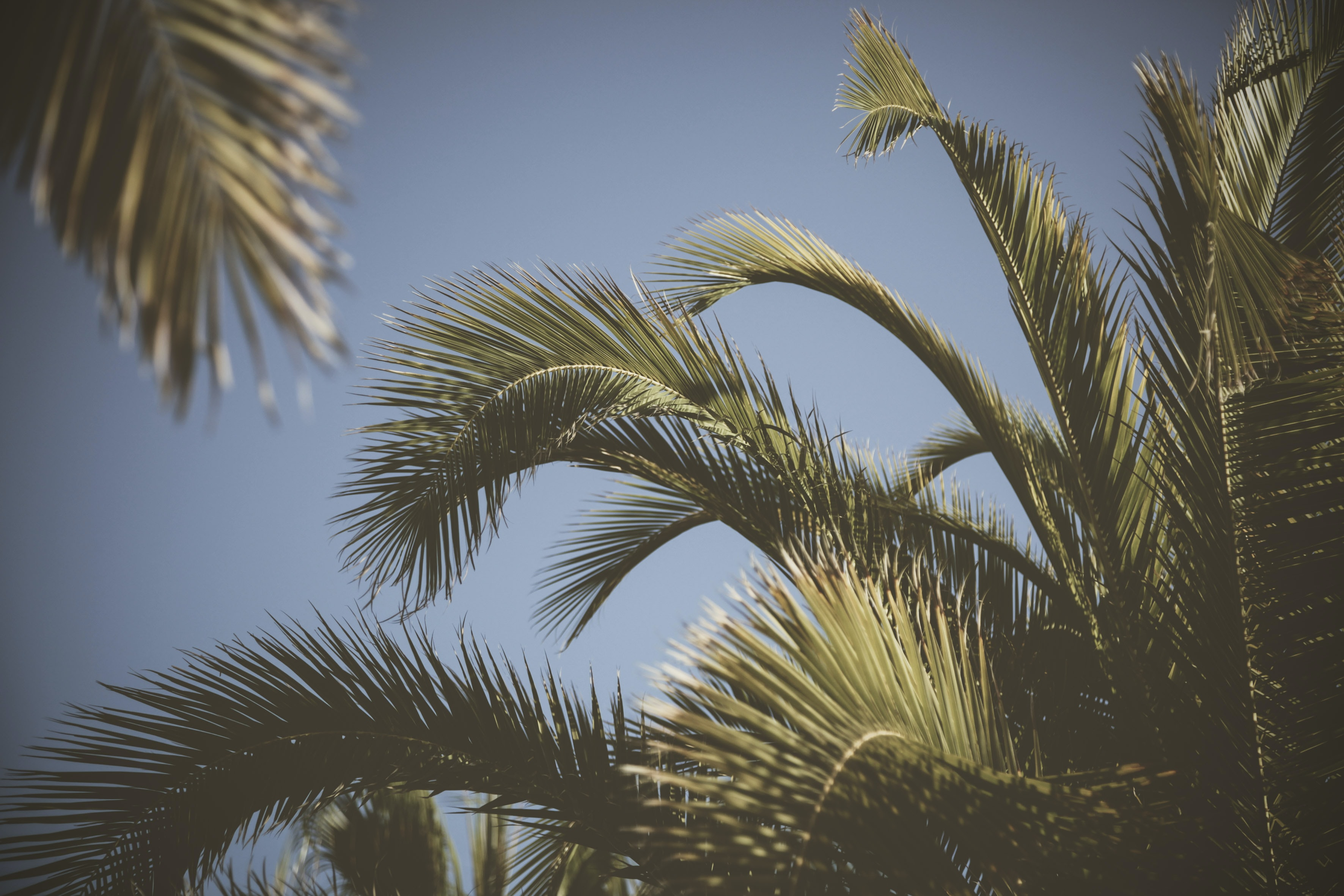 palm tree leves under blue sky