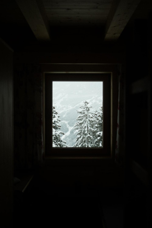 pine trees outside window