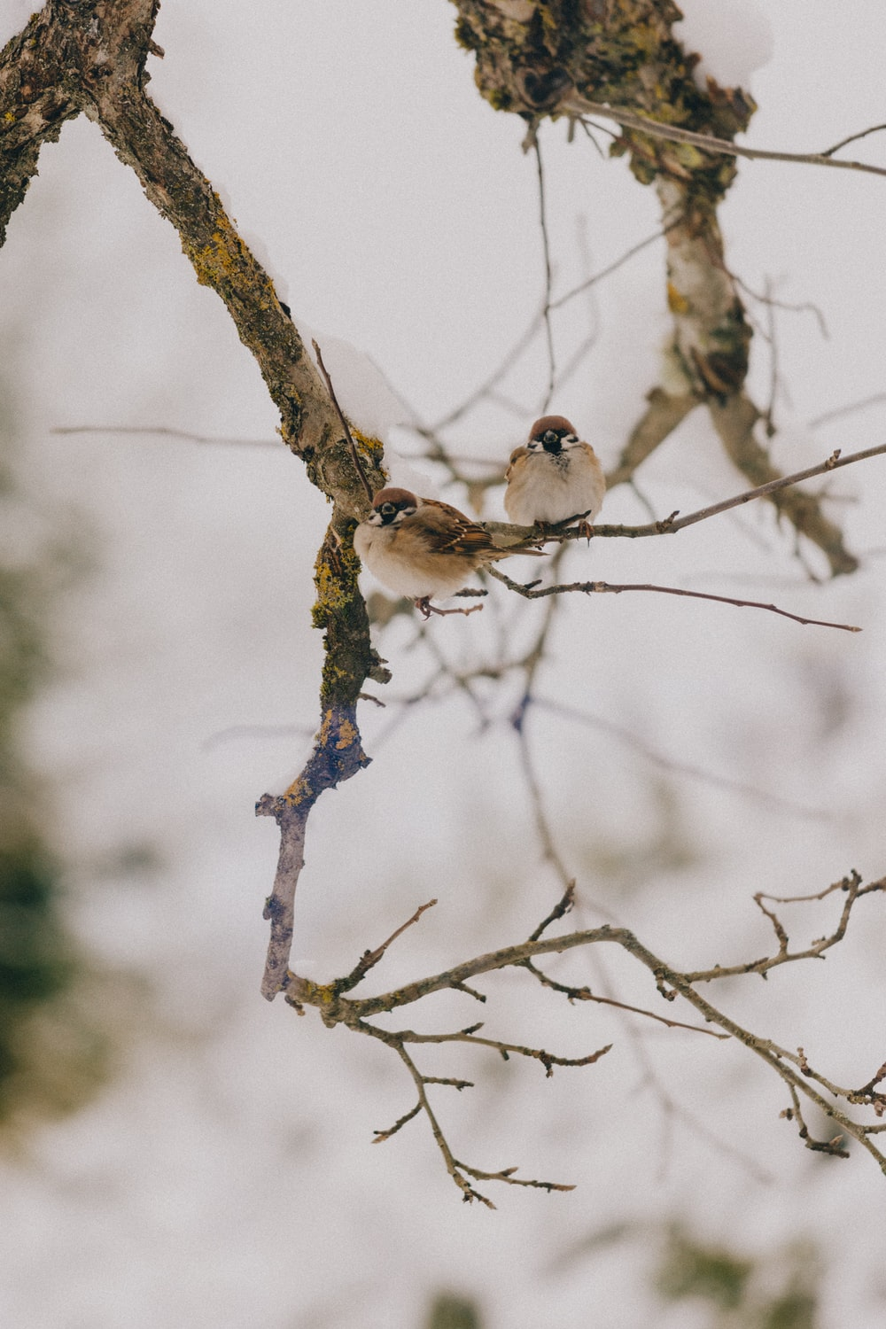 two white birds perched on tree