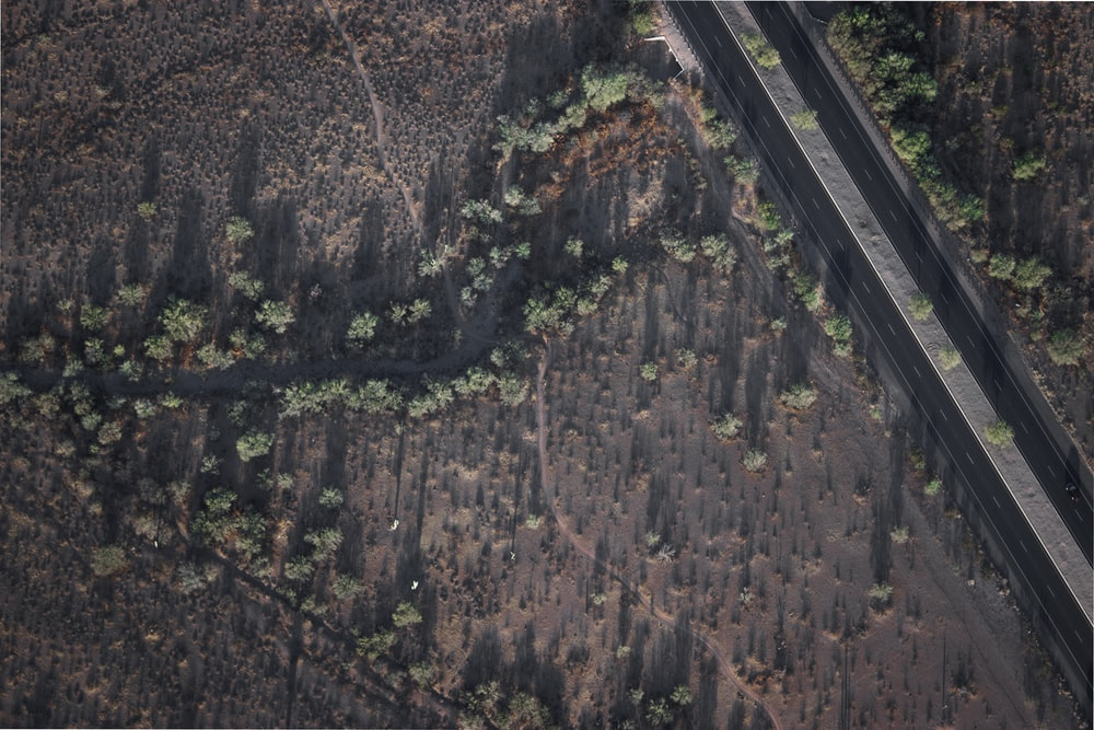 aerial photography of trees near highway
