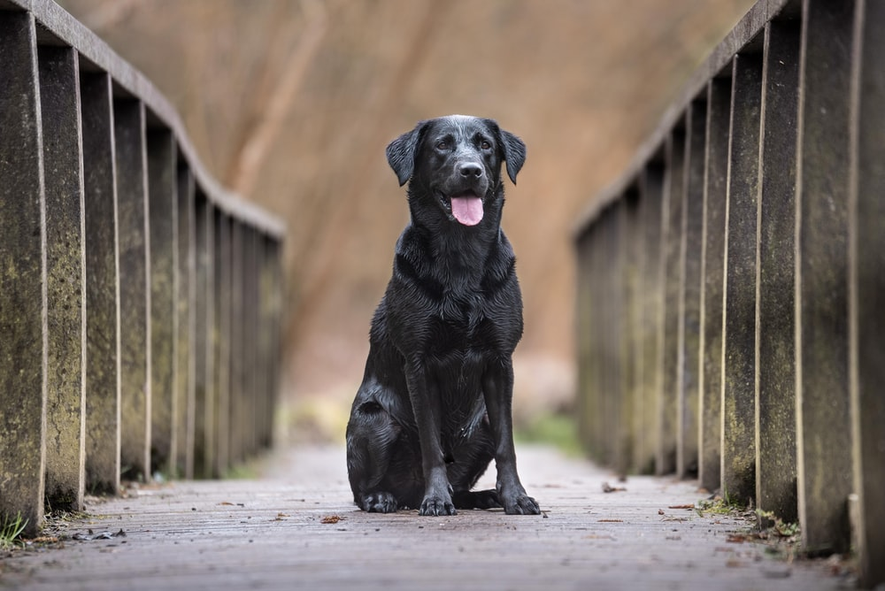 black short-coated dog sitting in between concrete railings during daytime