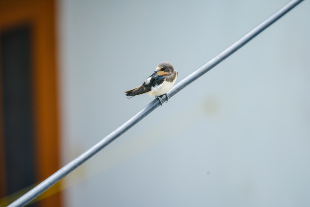 white, black, and brown bird perched on gray metal wire