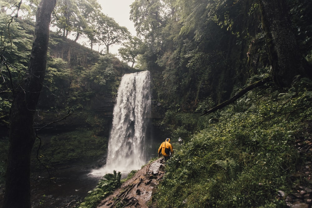person walking beside waterfalls surrounded by trees