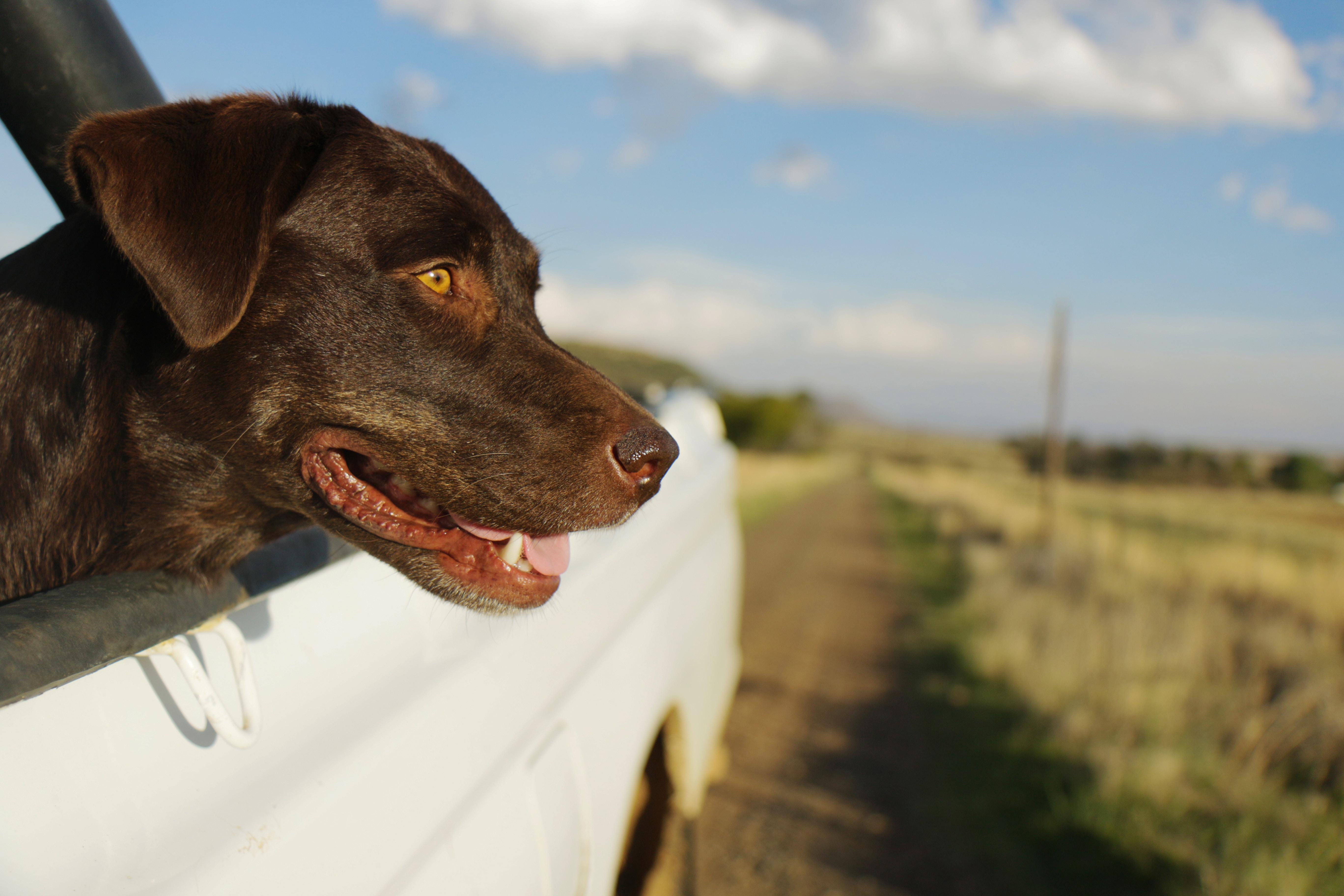 short-coated black dog near green grass field