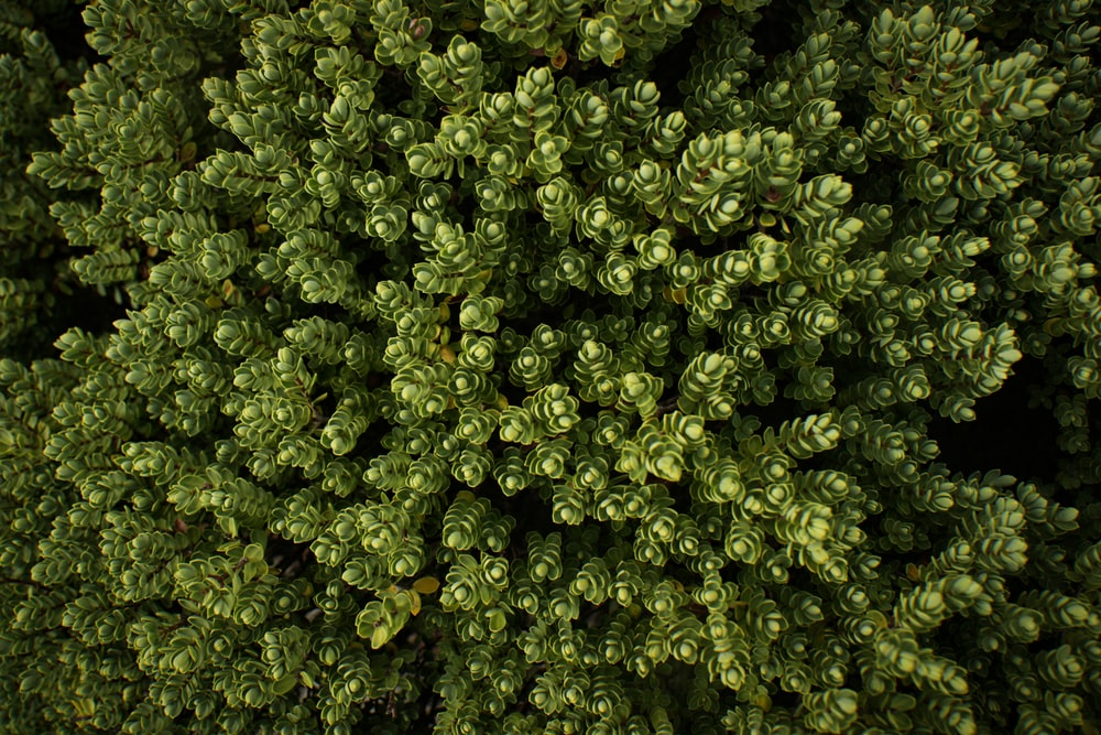 aerial photography of trees at daytime