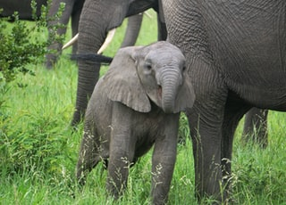 baby and adult elephants grazing