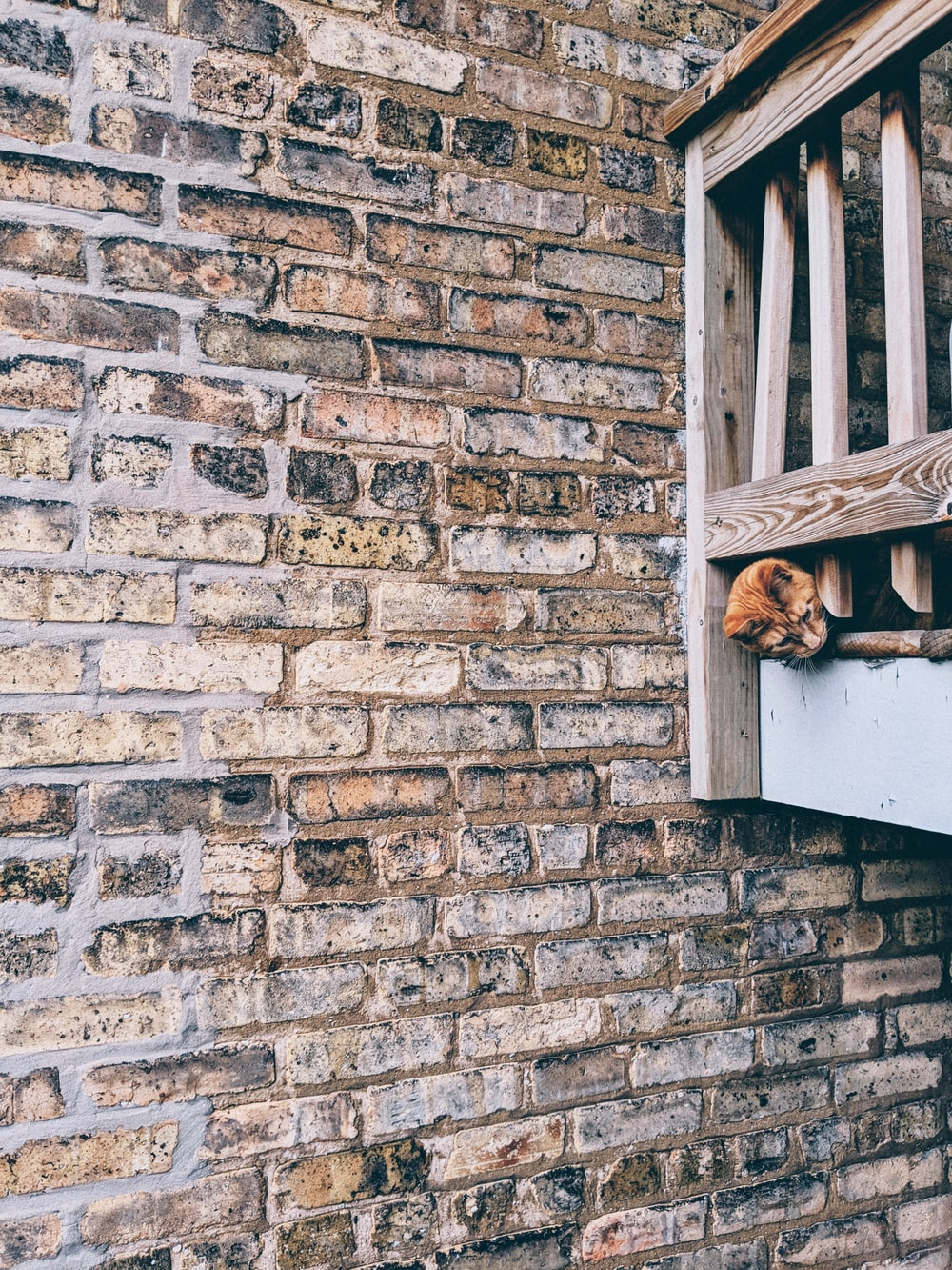 brown dog on wooden porch