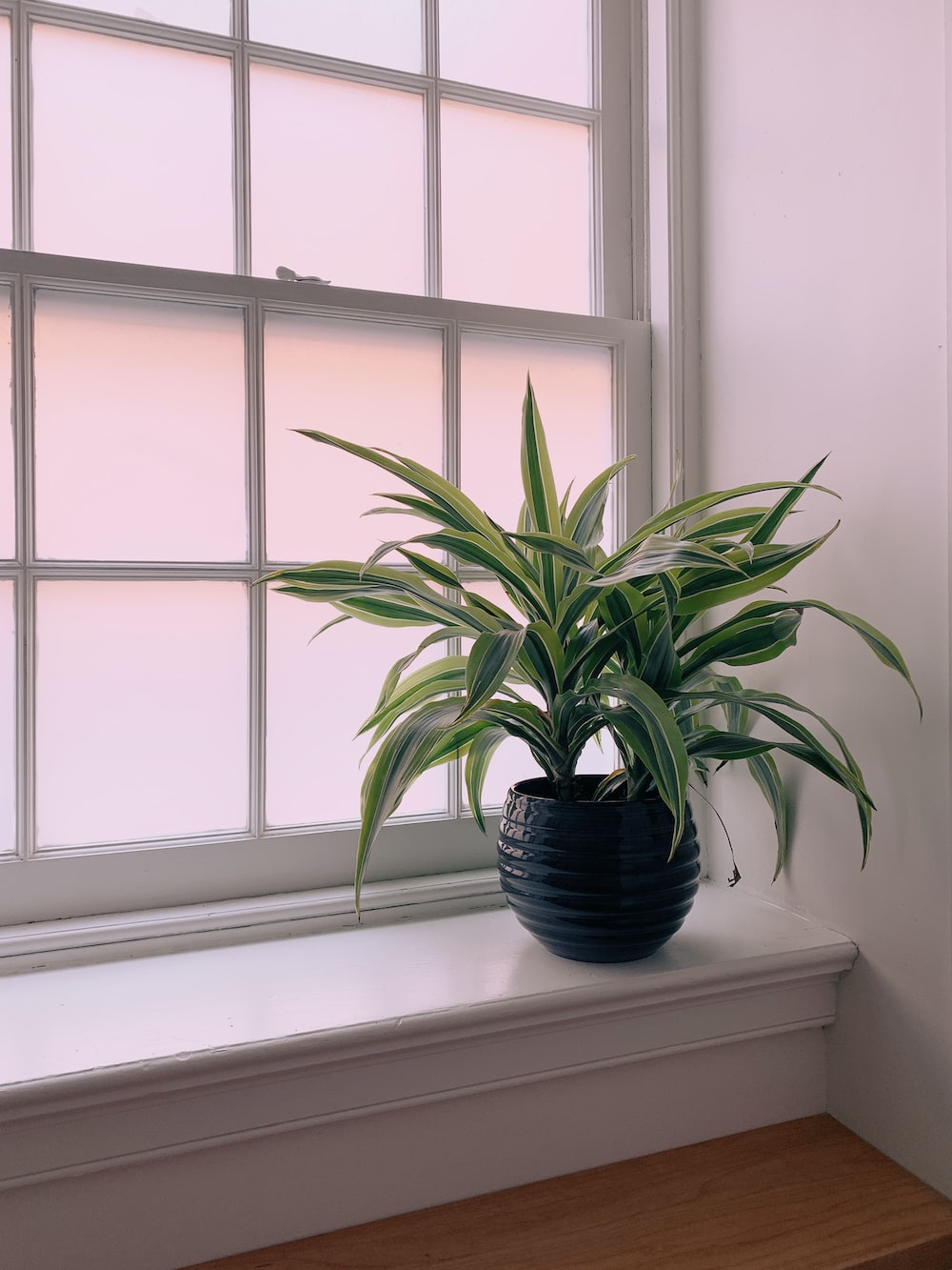 green linear plant on black pot near window panel