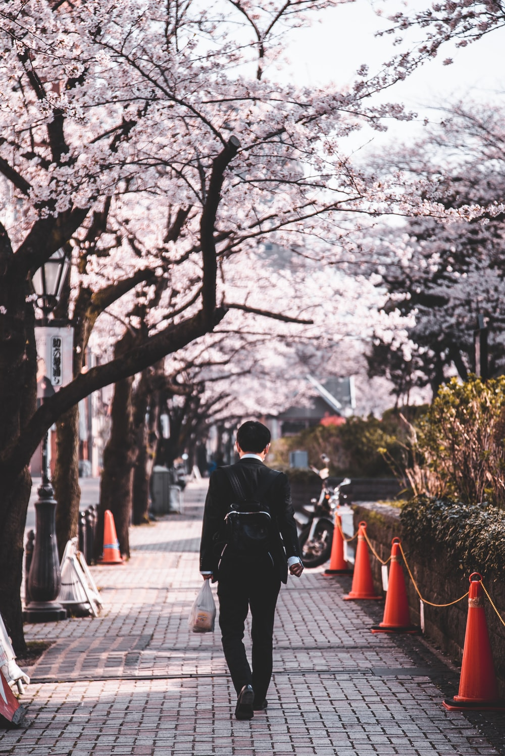 person in black long sleeved shirt walking on sidewalk inline of blossom trees