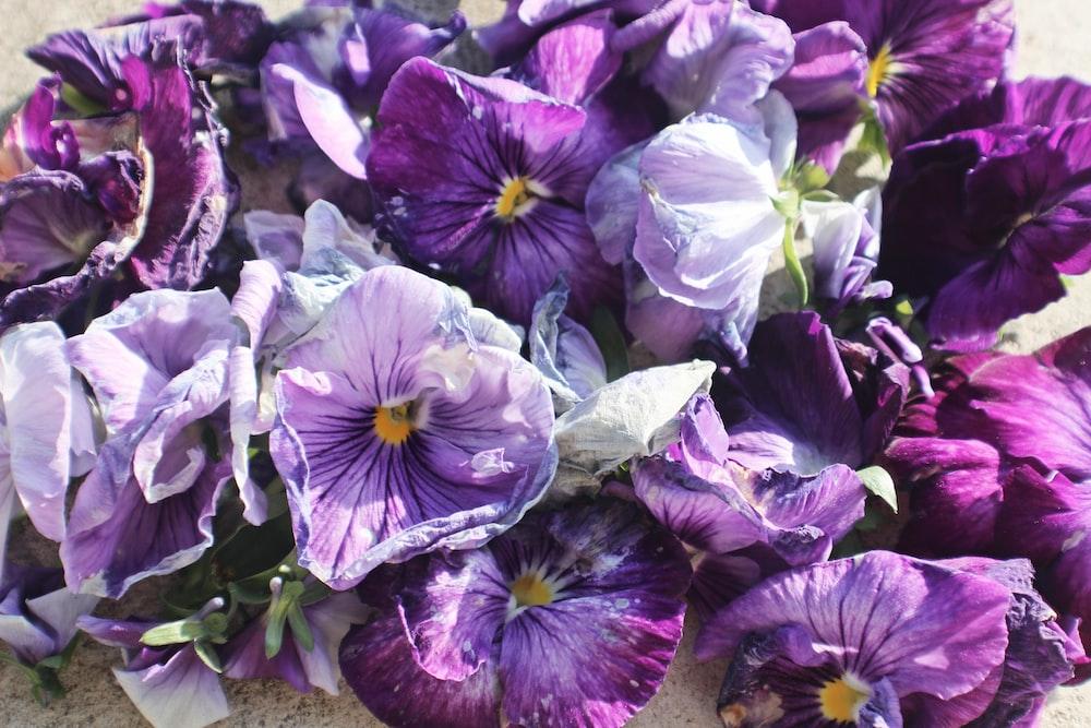 purple petaled floweres
