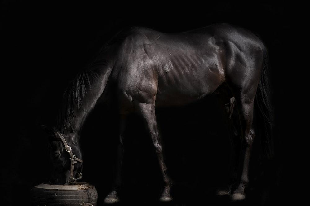 dark-brown horse