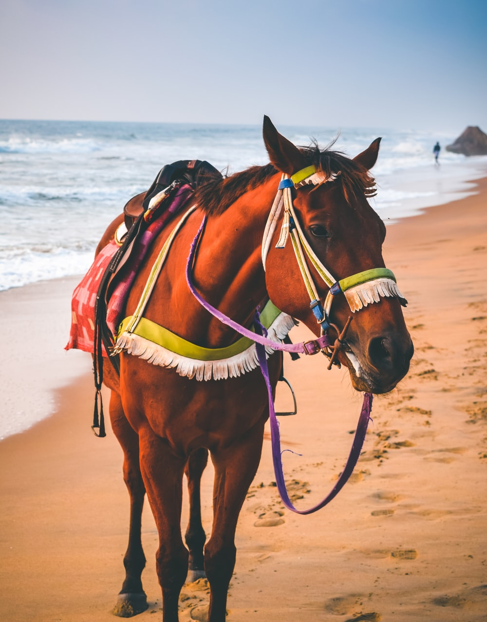 brown horse on white sand