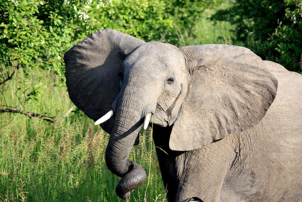 gray elephant near green plants and trees