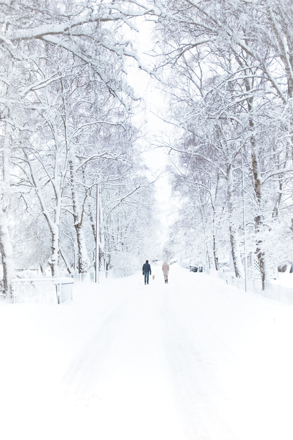 two person walking on snowy road inline of trees during daytime