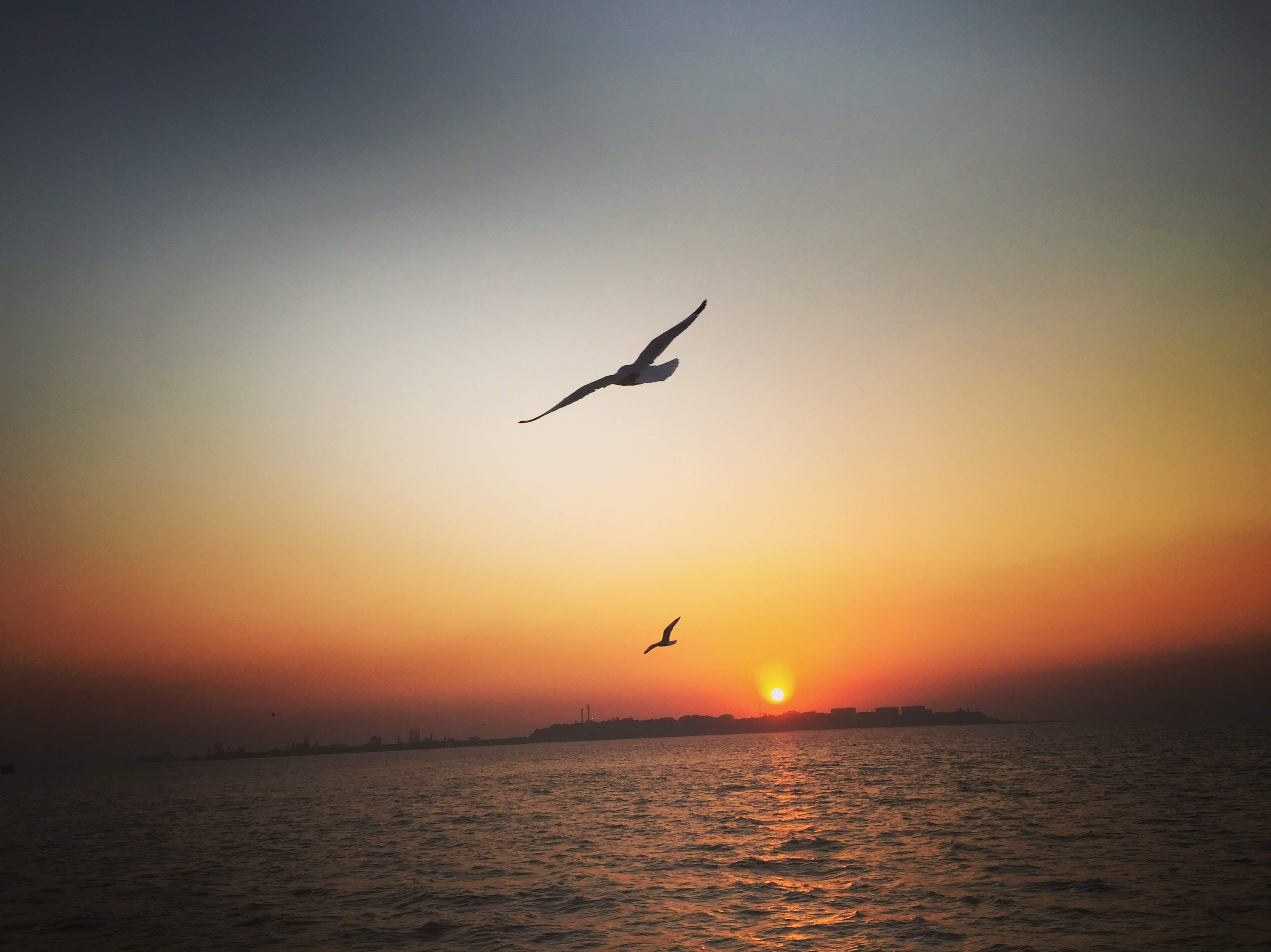 two birds flying above the ocean