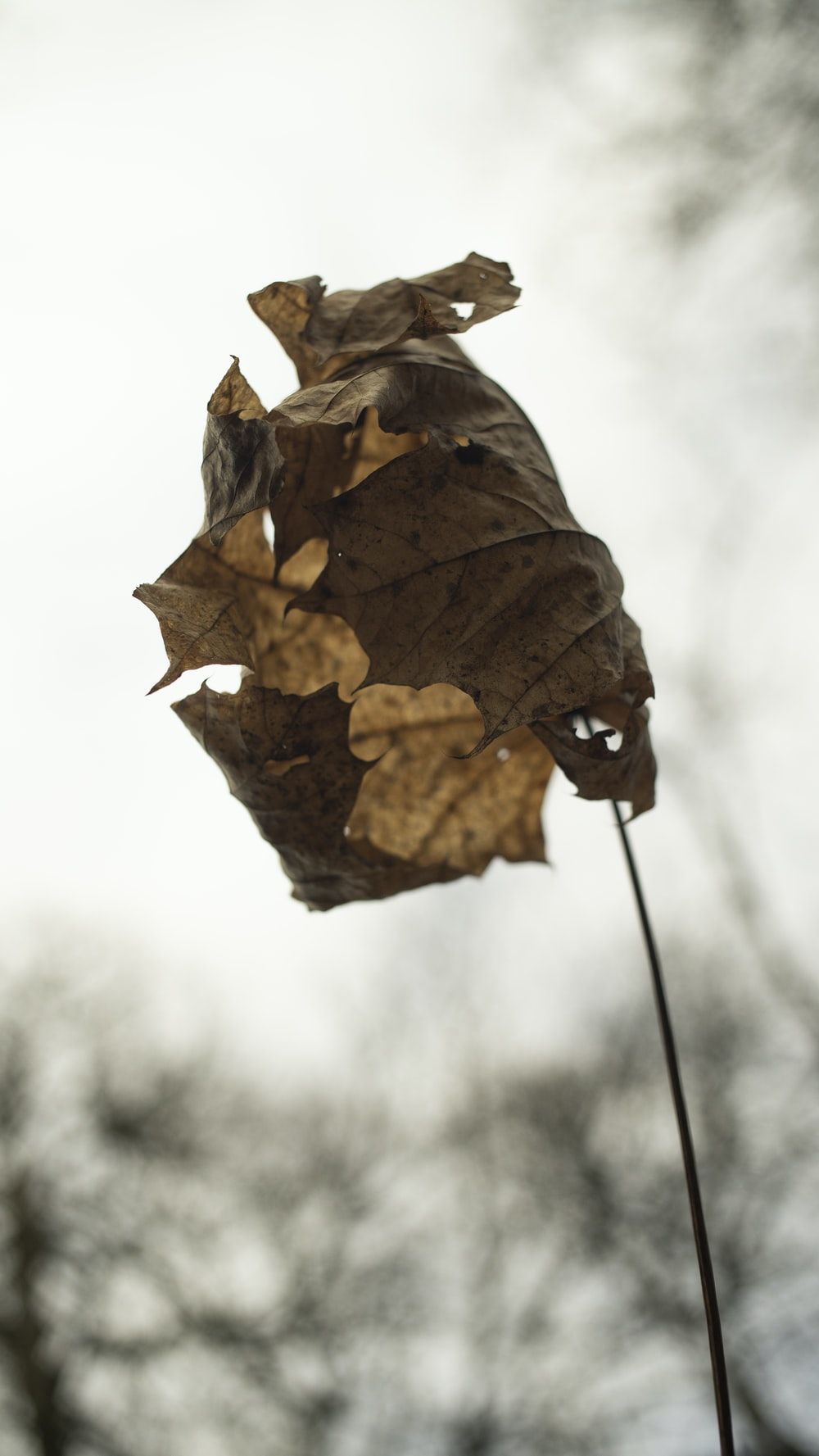selective focus photography of brown withered leaf