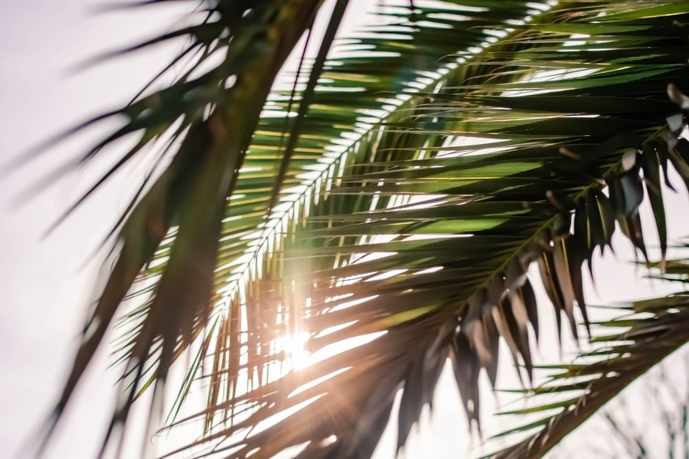 selective focus photography of green palm tree
