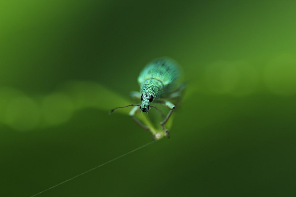 selective focus photography of green weevil