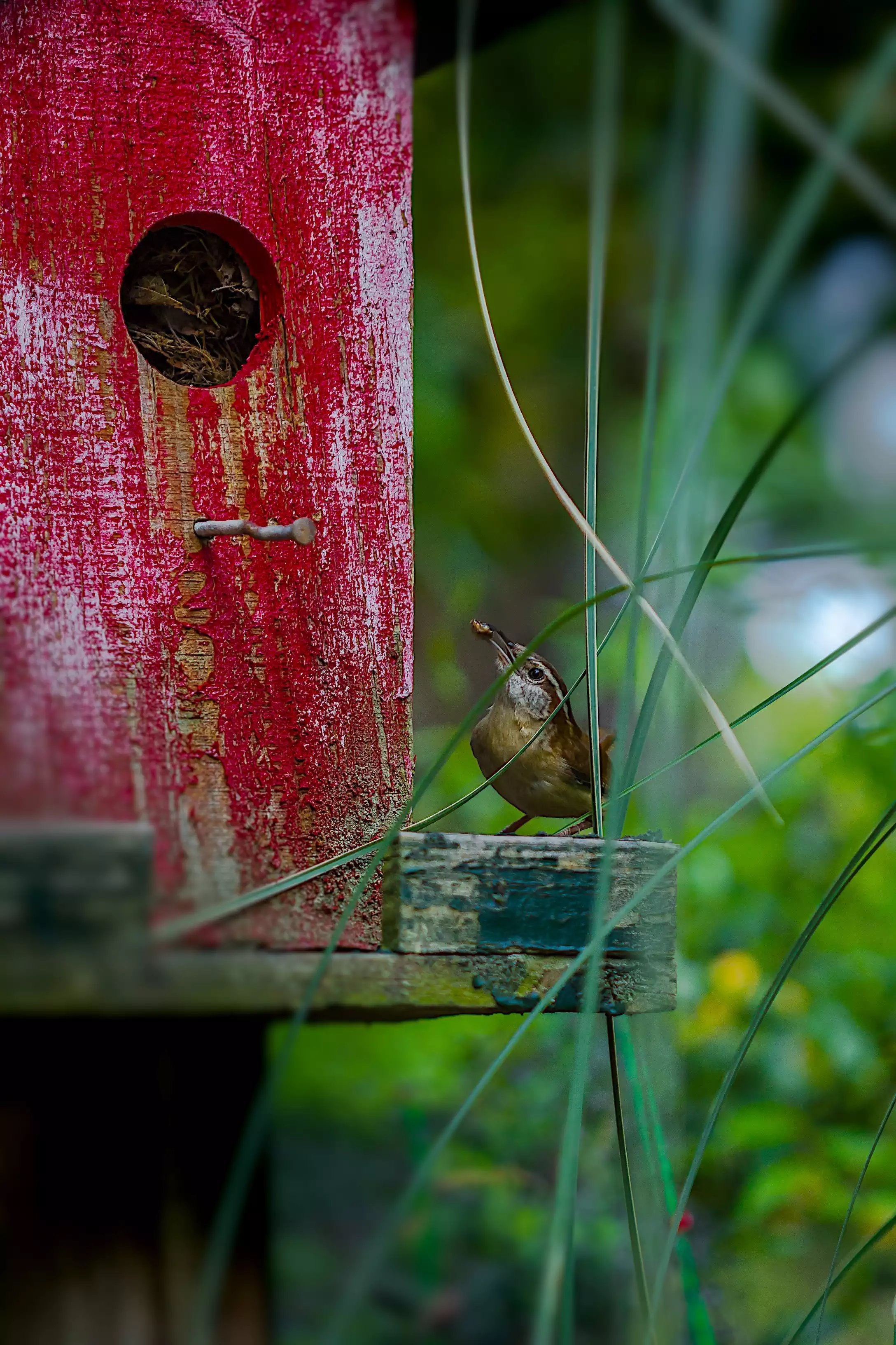 selective focus photography of brown bird near green leaf plants