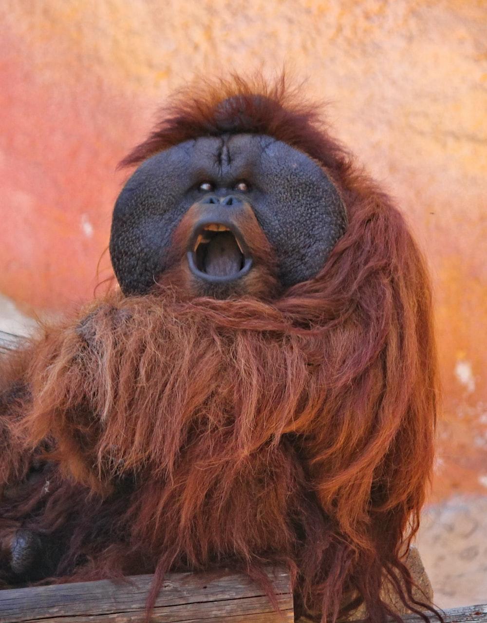 orangutan sitting on wood