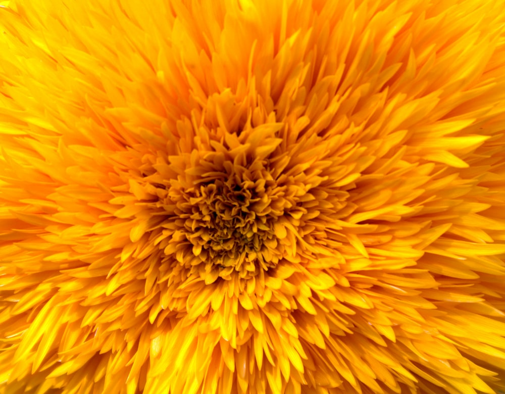 yellow clustered flower