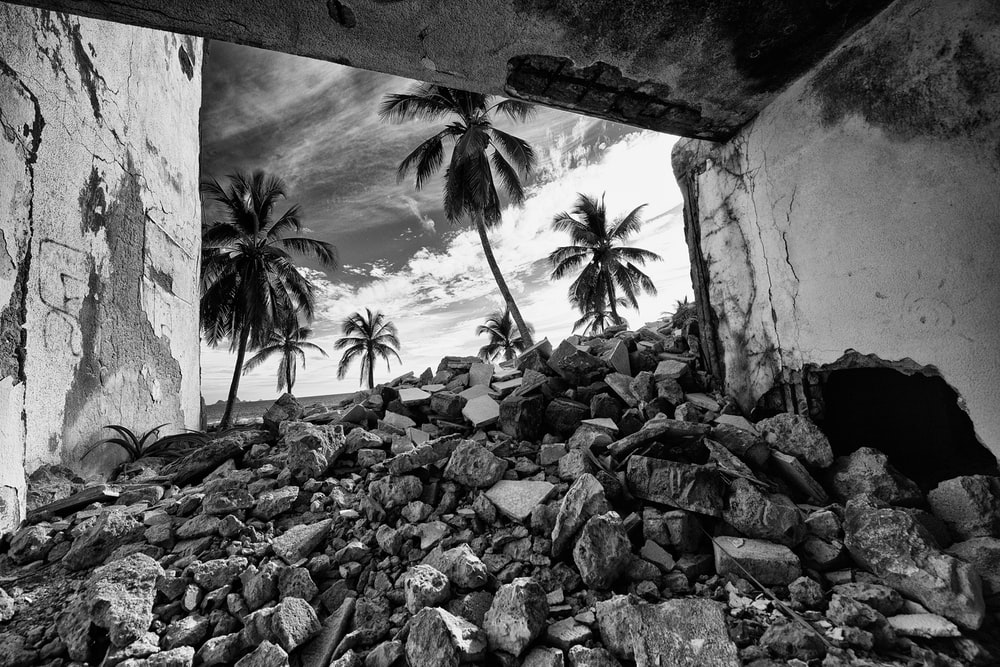 grayscale photo of rocks and palm trees