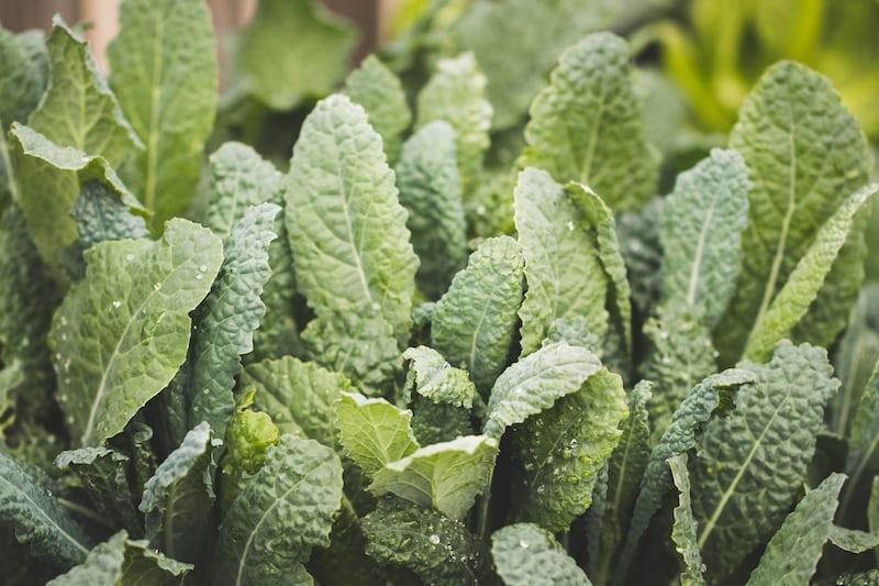 Lacinato Kale (per Bunch)