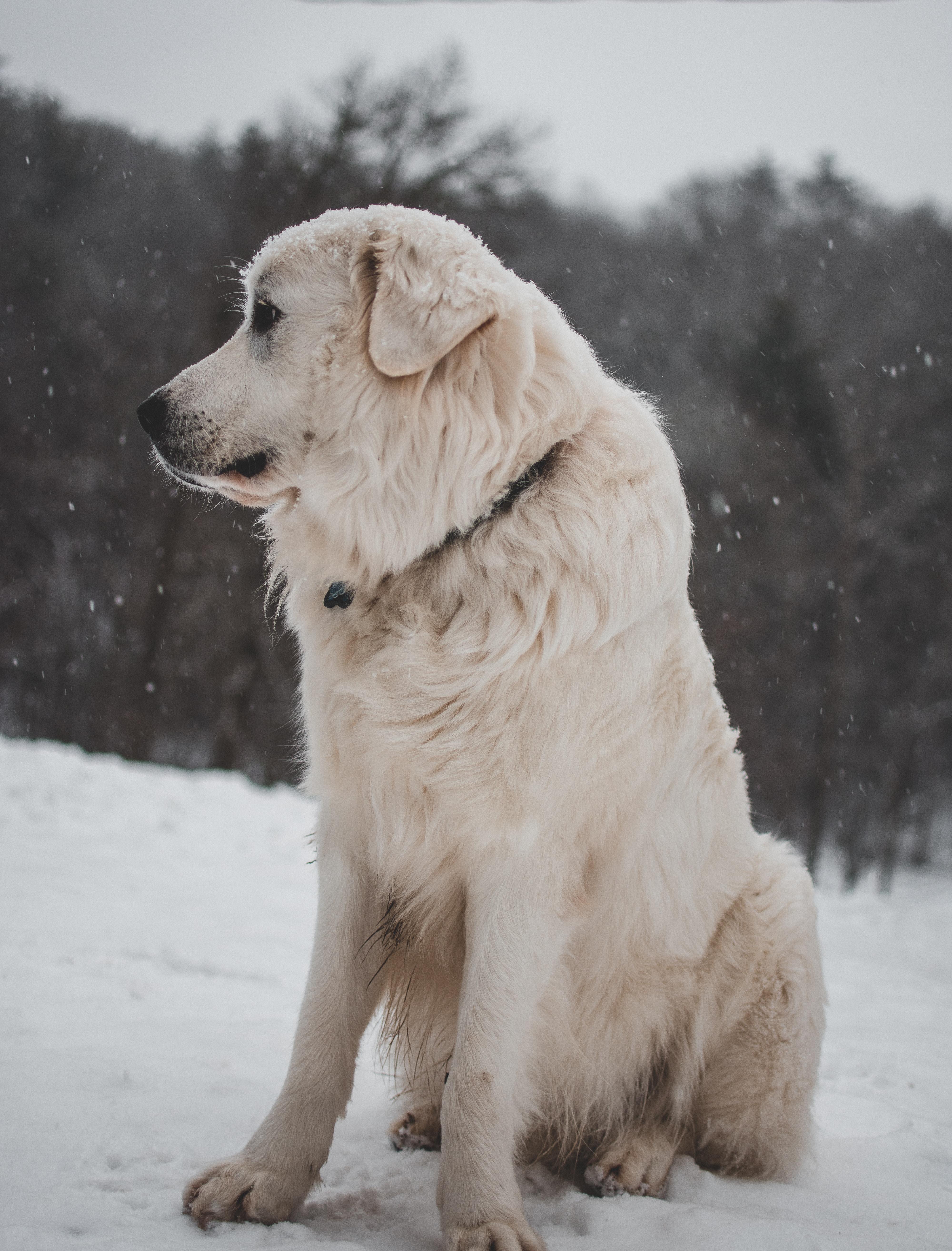 white coated dog sitting on icy surface