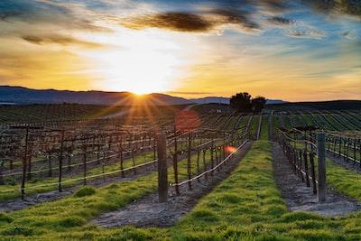 4671. Bor,szőlő, borászatok