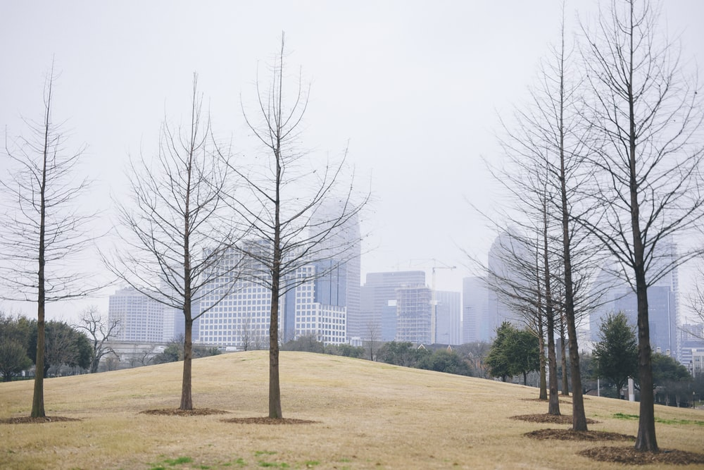 bare tree on field near buildings at daytime