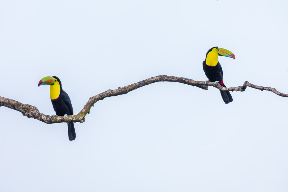two black-and-yellow bird perching on tree branch
