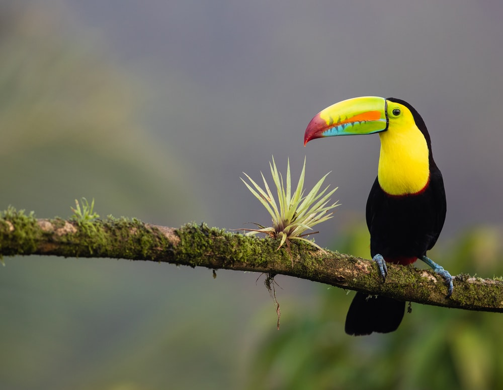 black and yellow bird standing on tree branch
