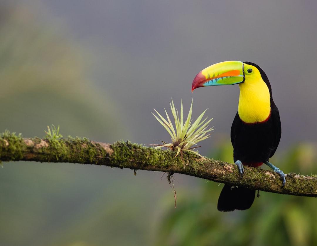 Visas For Algerian Citizens Travelling To Costa Rica Visabug